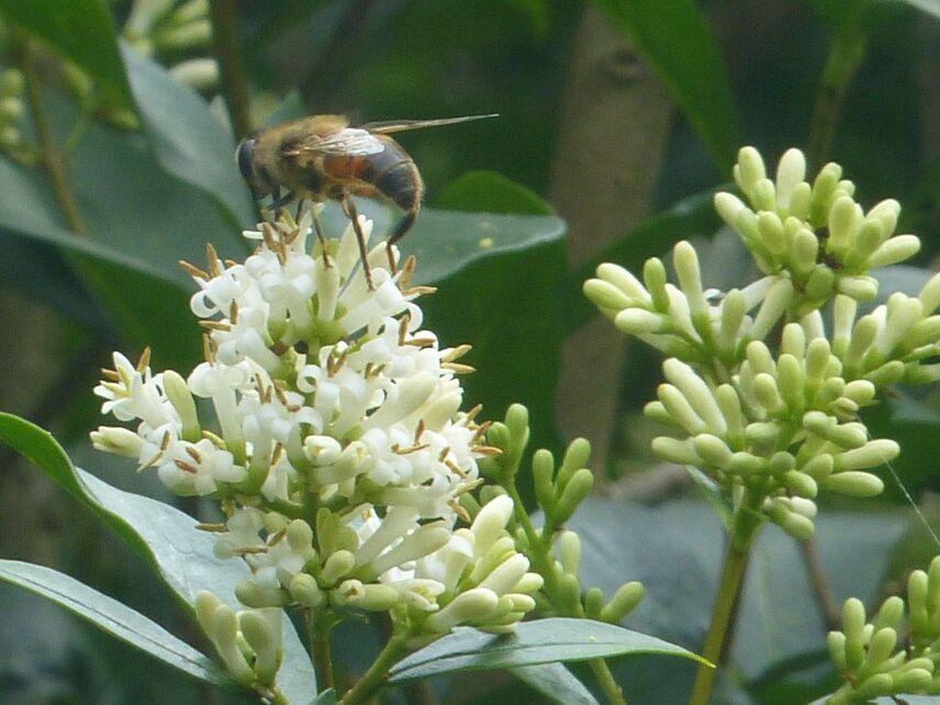 Des fleurs et des butineurs