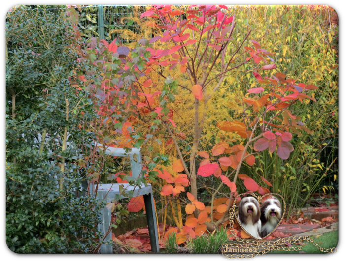 ♥Notre jardin en Novembre d' Athos & Cheyenne♥