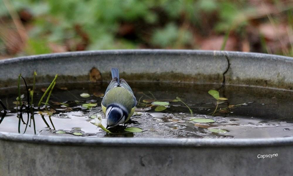 Une chipie au bain