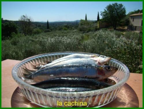 sardines--2-.JPG