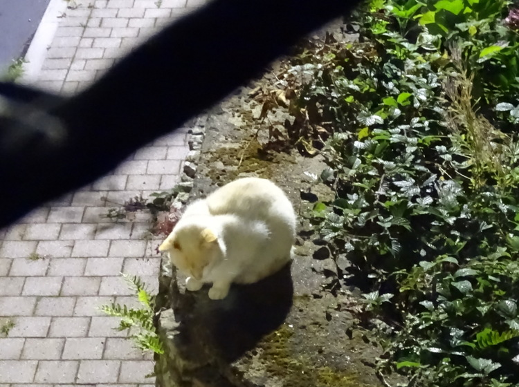 Dimanche c'est Quya et Didi (chat blanc)
