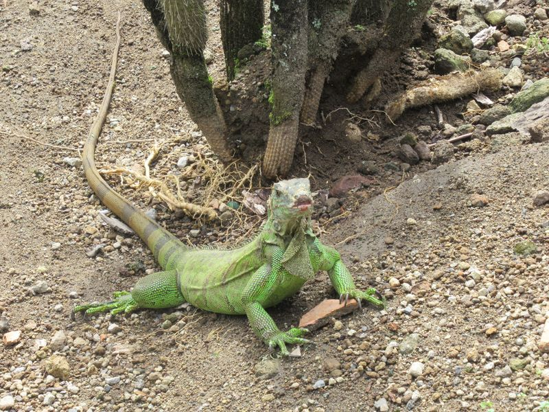 Jardin de Balata et Zoo de Martinique