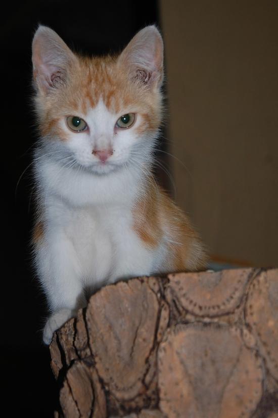 chaton09juilletb