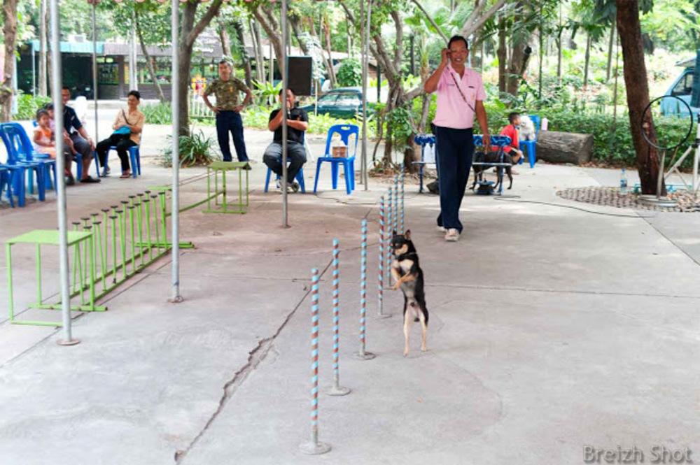 Dusit, un zoo au coeur de Bangkok - Le slalom bipède d'un quadripède
