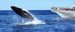 WWF / Dossier n°9 : Les Dauphins