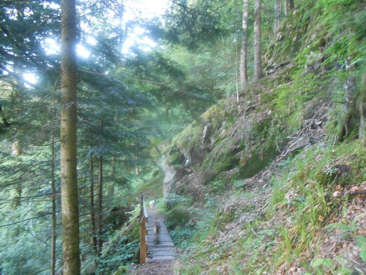Vosges- les roches de Morteville