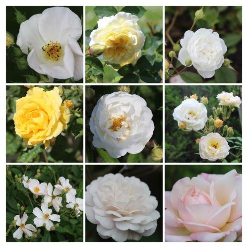 Mosaïques 2018 de roses