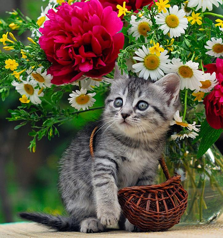 Citations et Proverbes 3:   5 citations sur les chats