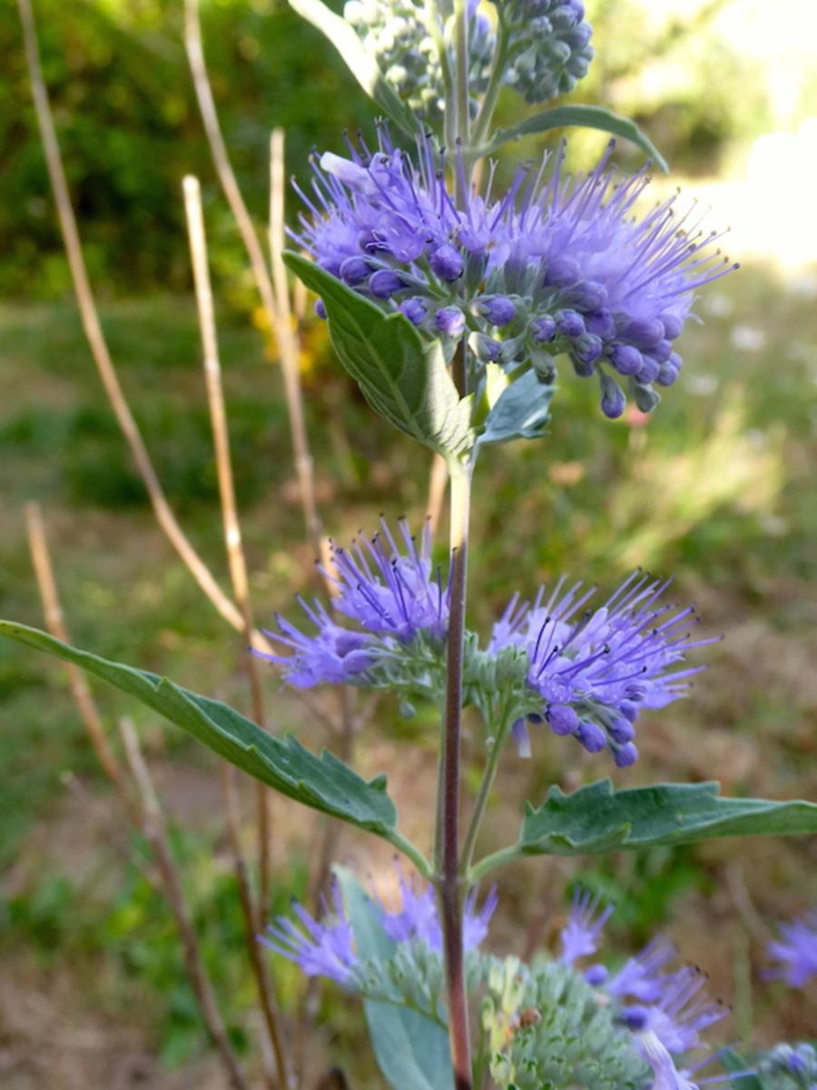 Evolution des fleurs du jardin au cours de l'été