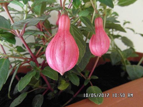 mes-fleurs-005.JPG