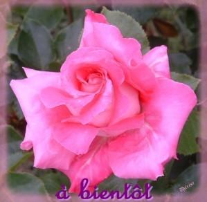 fleurs 017 (2)