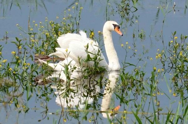 A la découverte des oiseaux de l'étang de Marcenay, avec Bernard Frochot....