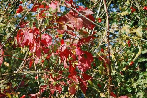 Vive l'automne...
