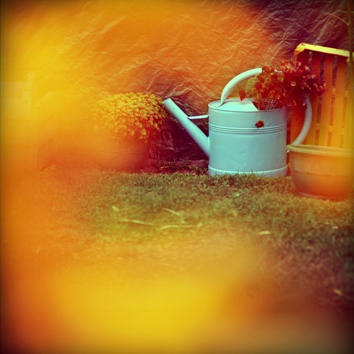 Le-jardin 6814v-pola01