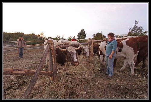 Ferme des 8 vaches