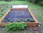 La Parcelle n ° 6 - Les plantes aromatiques et les fraisiers