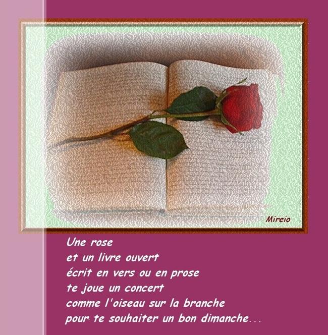 Une rose, un livre