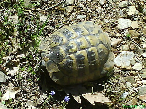 Tortoise bg