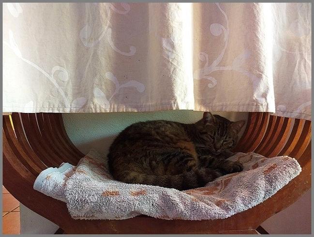 Hibernation chez Les Chats du Maquis