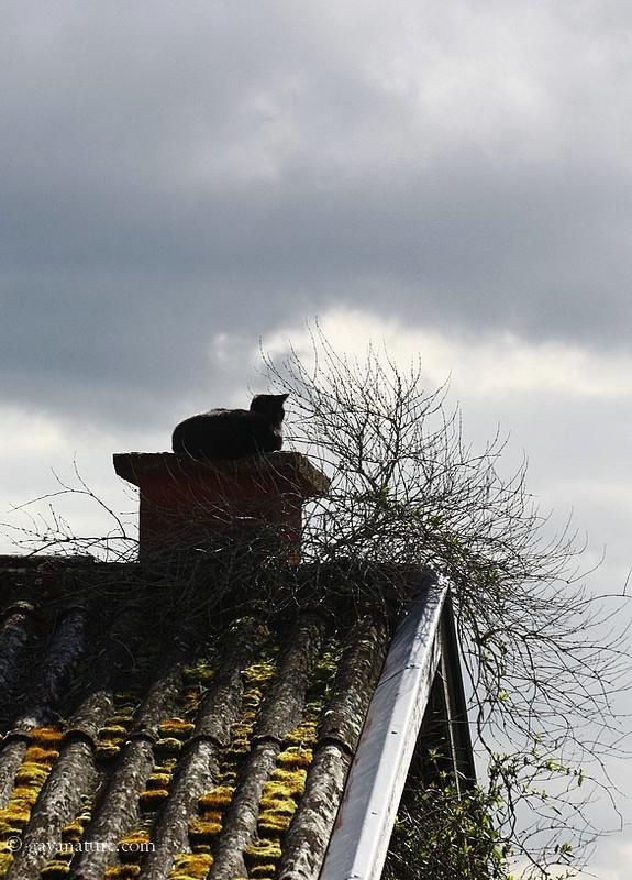 Une chatte sur un toit (pas) brûlant