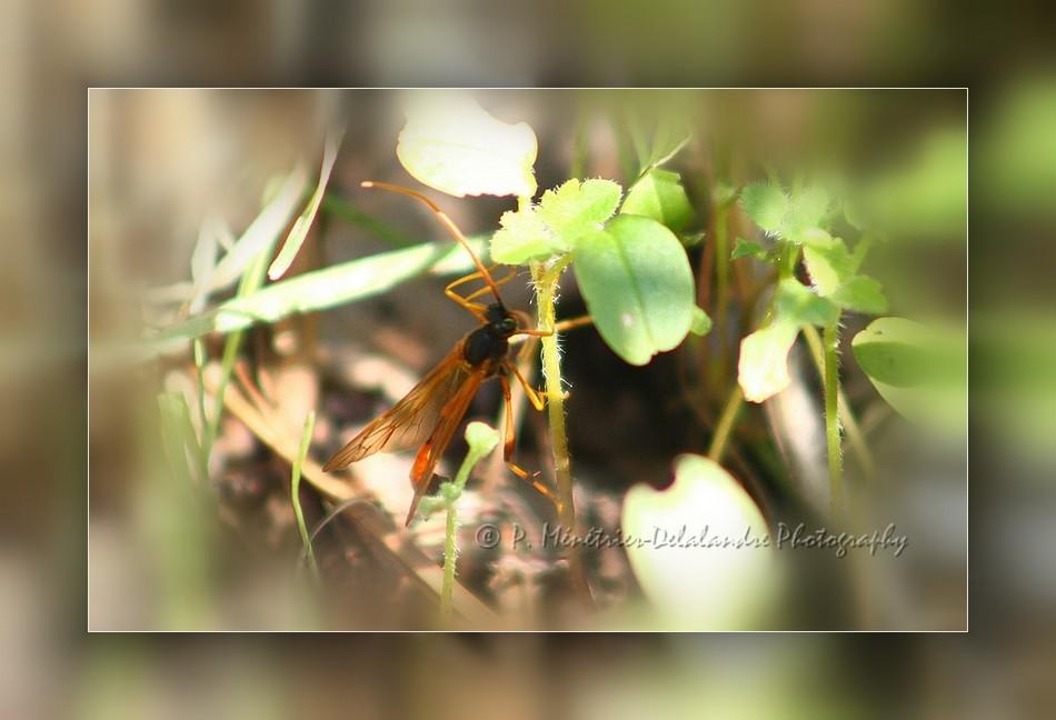 Etrange insecte volant...
