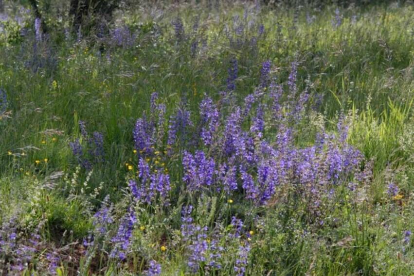 Fleurs-12-4077.jpg