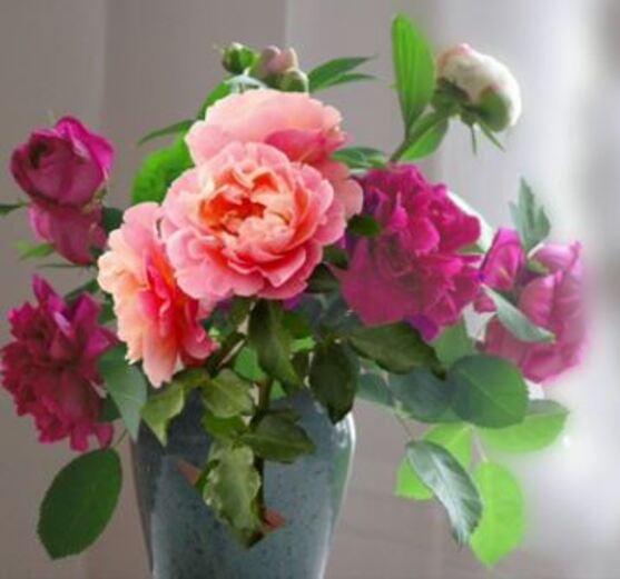 Dessin Et Peinture  Vido   Comment Peindre Des Roses En Hiver