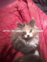 photos de mes petits chatons 2ème partie