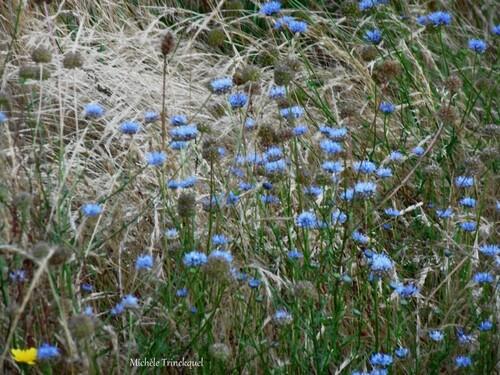 Des fleurs dans mon village, le 4 juillet...