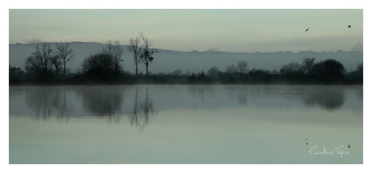 Brume matinale sur l'étang