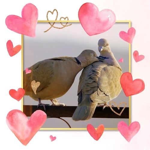Love me tender !