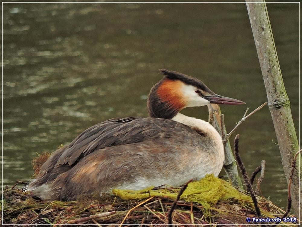 Réserve ornitho du Teich - Mai 2015 - 10/10