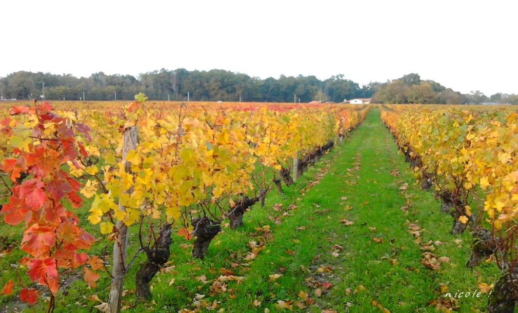 couleurs des vignes !