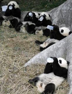 Ours, Pandas