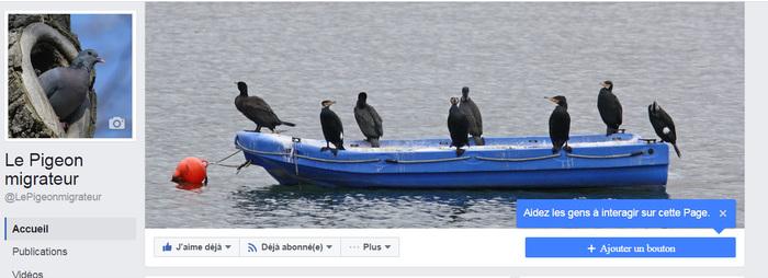 Le Pigeon migrateur est sur Facebook