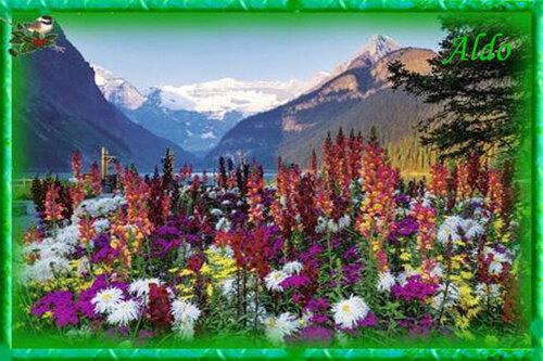 PPS Montagnes fleuries