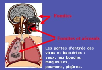 Comment attrape t'on des maladies ?