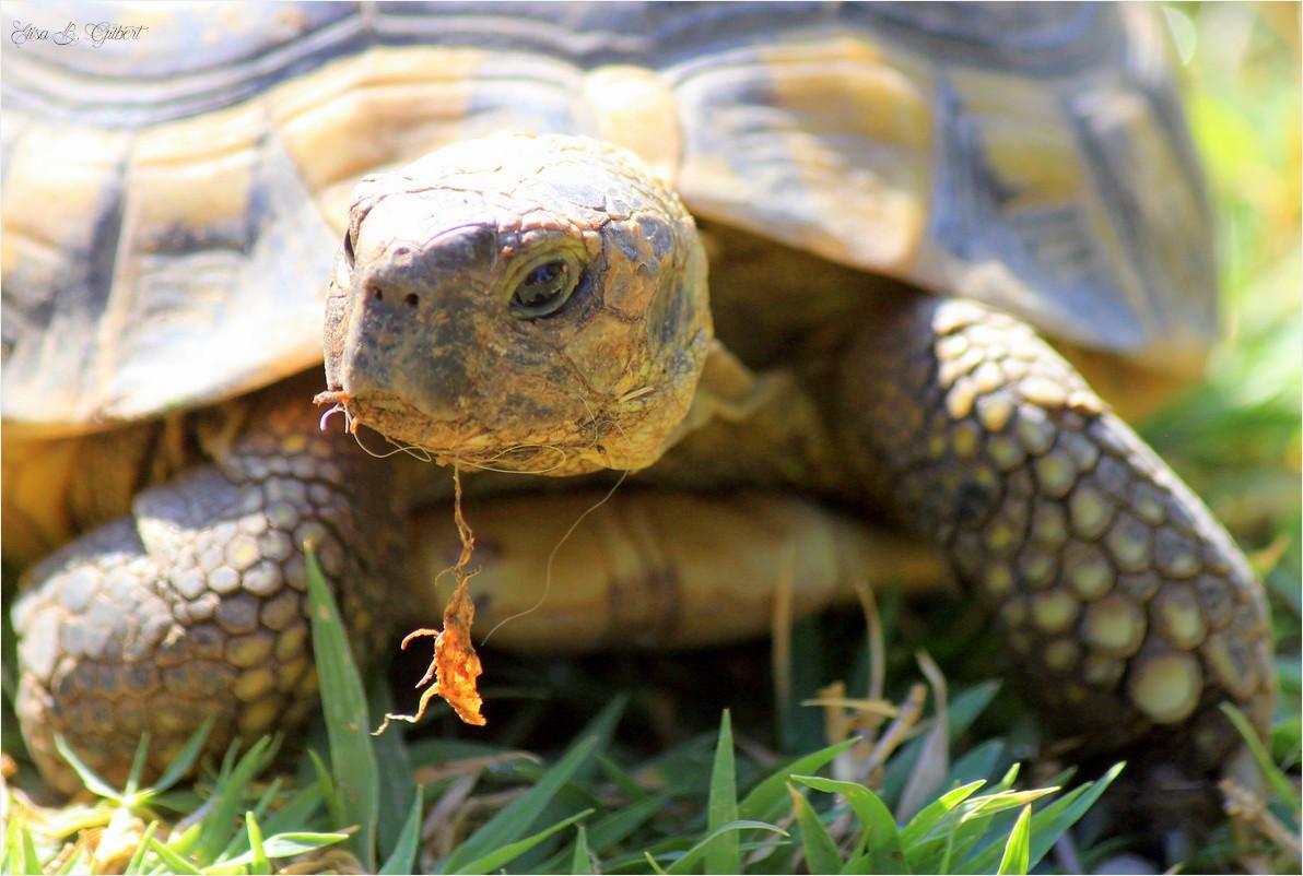 joli enclos pour tortue