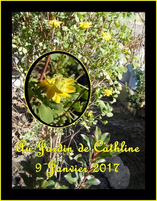 Jardineravec la lune du 11 au 20 Janvier 2017