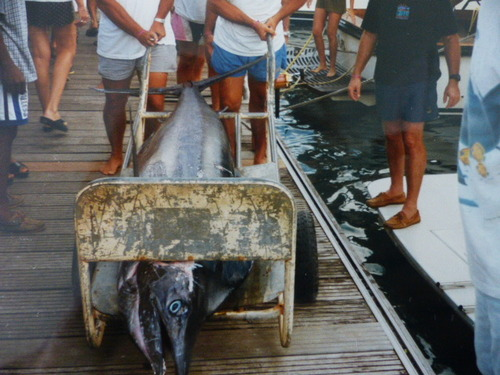 KhAnEl3 pêche En cArAïBe