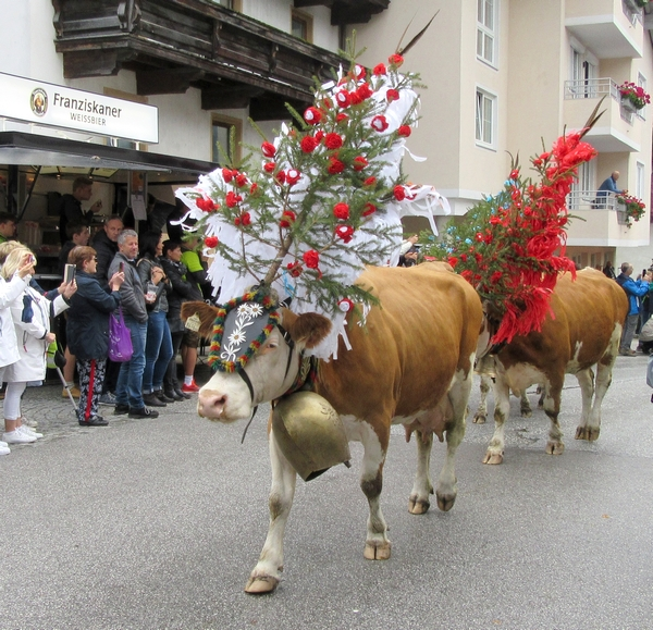 La descente des troupeaux des alpages au Tyrol, un spectacle inoubliable !