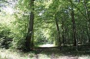 """Résultat de recherche d'images pour """"forêt en été scène"""""""