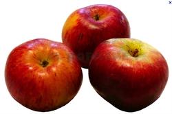 les pommes de ce jeudi