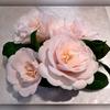 Camellia Japonica Rose Des Sables.jpg