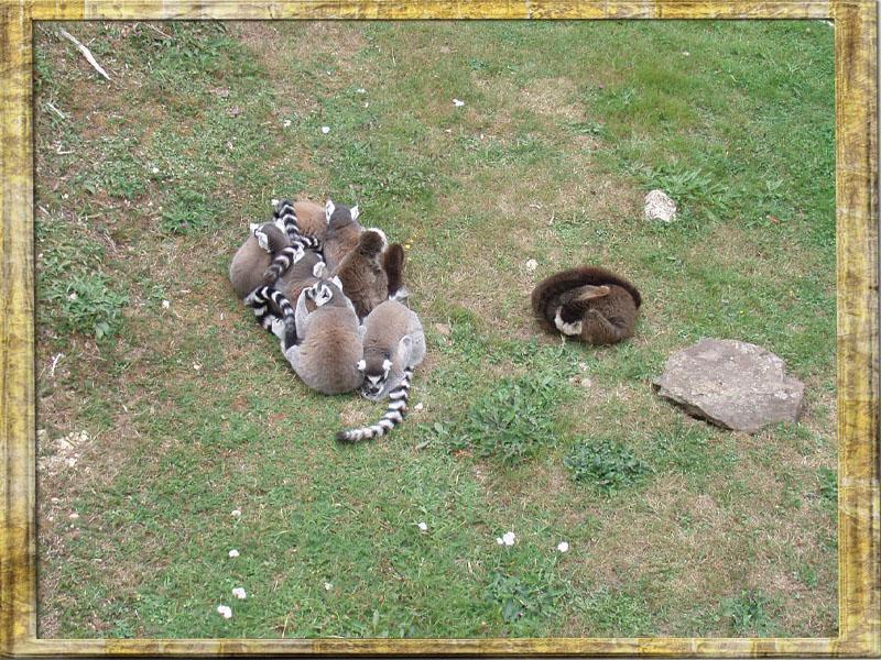 35720 Pleugueneuc  zoo de la Bourbansais