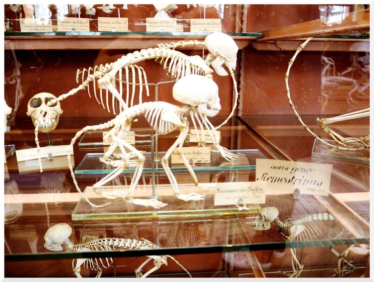 Galeries d'Anatomie comparée et de Paléontologie.