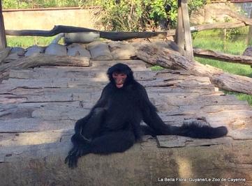 Guyane/Le Parc Animalier de Macouria