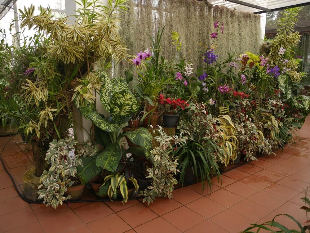Jardin botanique de Peradeniya - Sri Lanka