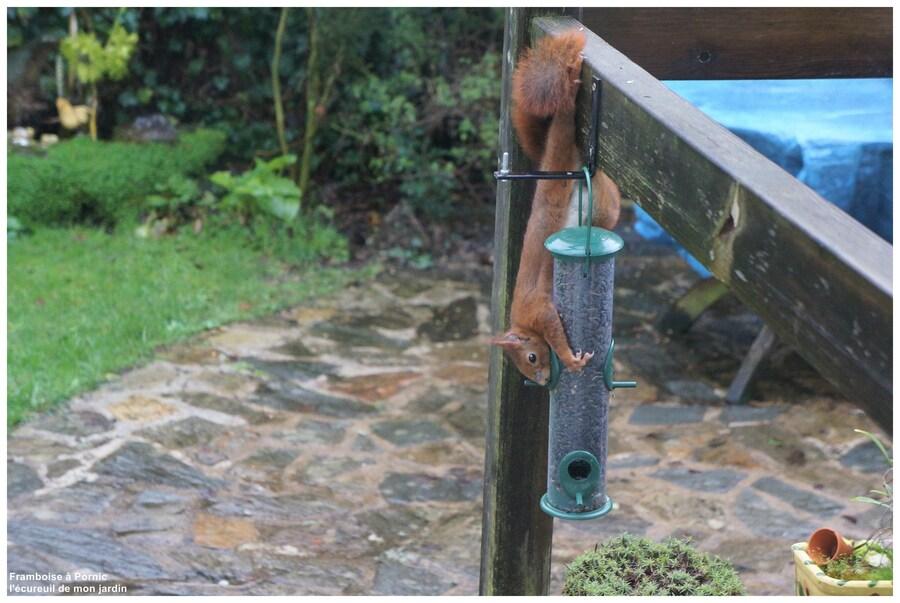 Les écureuils du jardin