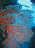 Plongée Hienghène - Nouvelle Calédonie